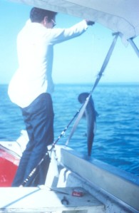 A small Bonnet Shark caught in the behind Sugarloaf Key, Dec 1972