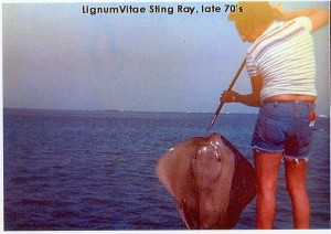 Sting Ray caught near Lignumvitae Key
