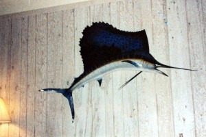 """The """"Sail"""" (A Fiberglass Reproduction) Hanging on the Wall of my Key Largo Residence"""