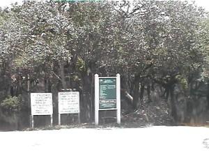 Myaka River Park FL 70